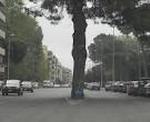 Nacen árboles entre el asfalto
