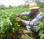 17 de mayo: ¡Los guajiros son tremendos cubanos!