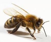 La Tierra sin abejas. Un funeral sin flores